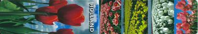 Magnetische boekenlegger    holland tulpen