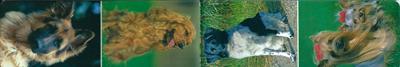 Magnetische boekenlegger    dieren - honden - 4 stuks