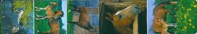 Magnetische boekenlegger    dieren - paarden