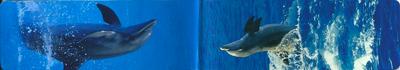 Magnetische boekenlegger    dieren - dolfijn
