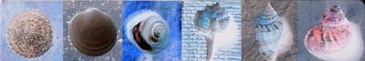 Magnetische boekenlegger    schelpen